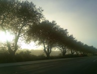 Trees alongside the Whanganui River, early morning