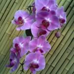 Orchids in the Bason Botanical Reserve, Wanganui
