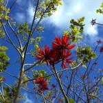 In the Bason Botanical Reserve, Wanganui