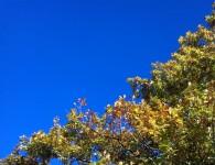 Tree at Ashley Park