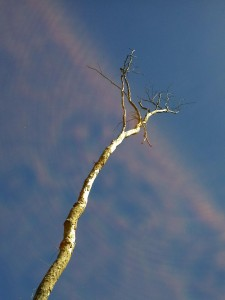 Tree at Westmere Lake